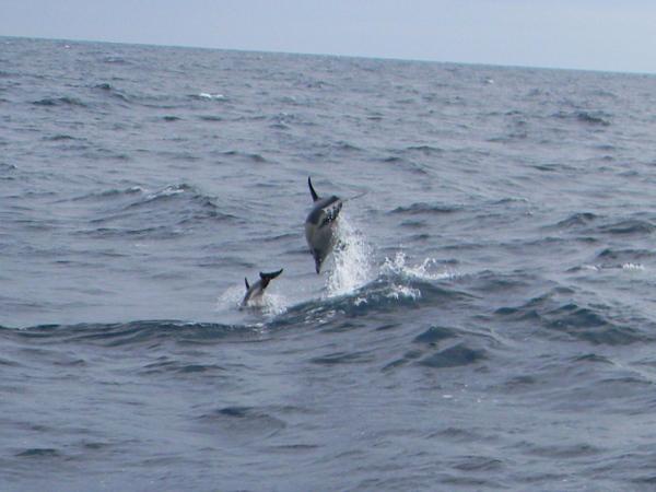delphin08